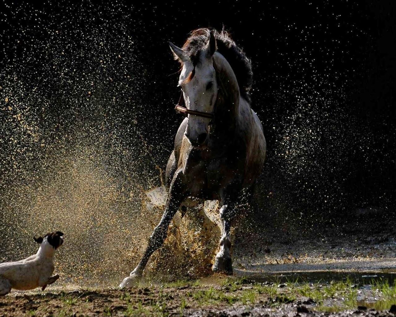 Best   Wallpaper Horse High Definition - 124141  Photograph_757118.jpg