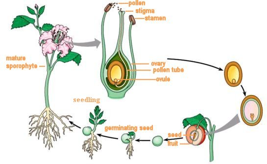 Reproduction in Plants – PSLE SCIENCE |
