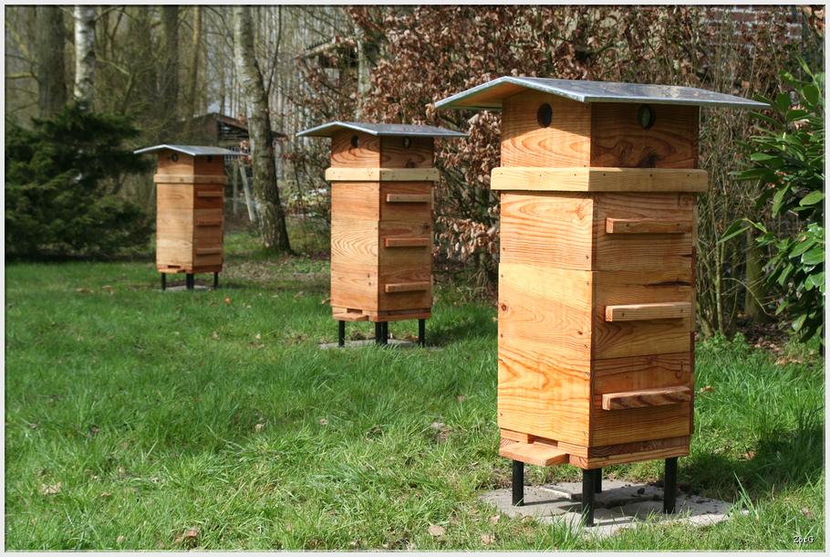 les abeilles de l 39 eyre ruche warr. Black Bedroom Furniture Sets. Home Design Ideas