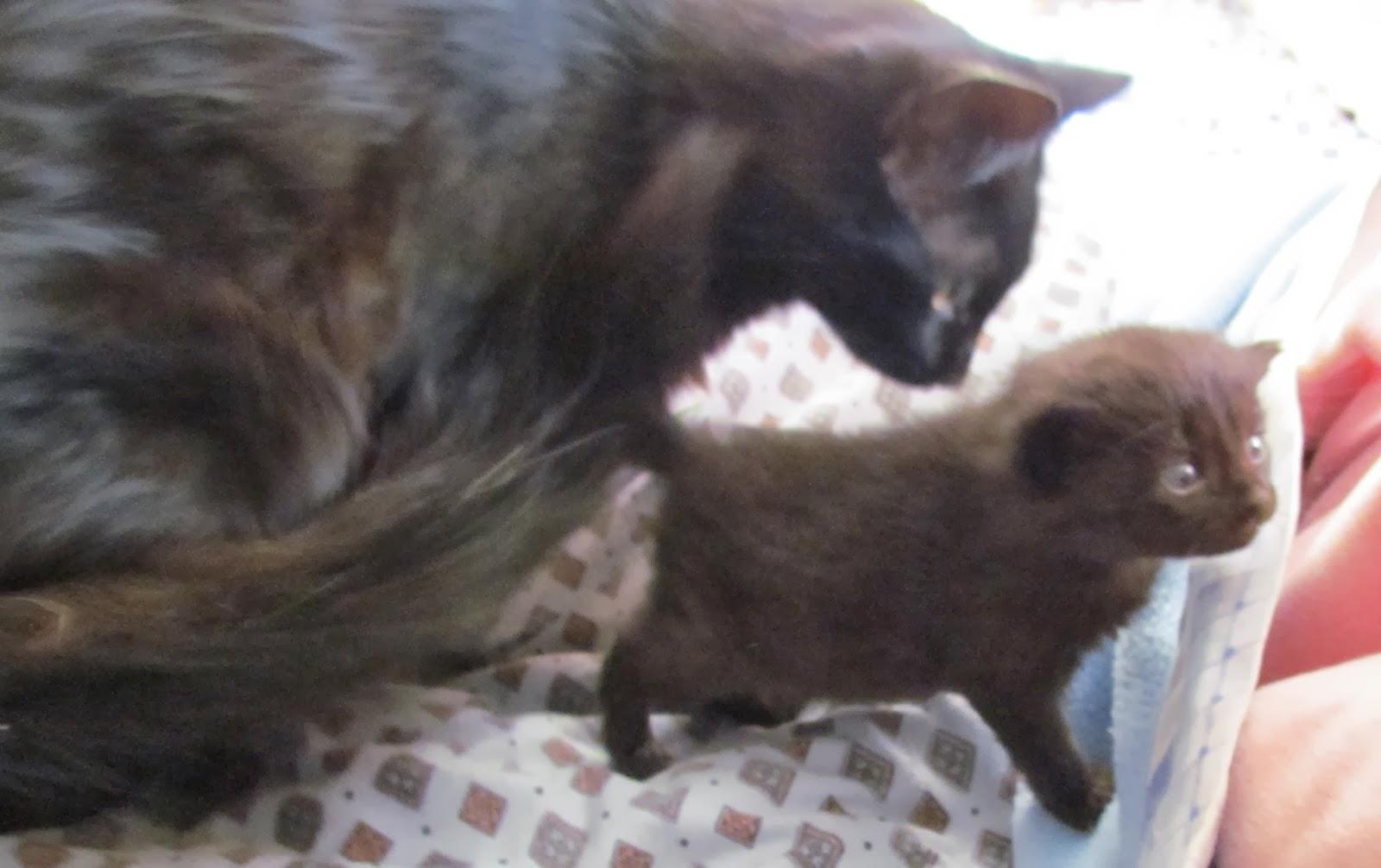 chaton essaye de teter
