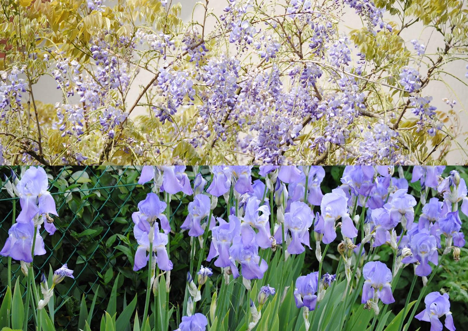 Quiltintours mauve et bleu au jardin for Fleurs au jardin