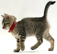 Cat with red collar