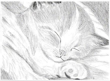 Kitten asleep on one paw pic