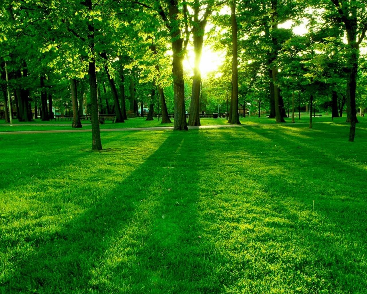 http://3.bp.blogspot.com/-SwTN2lphCkk/T--nIKvVj4I/AAAAAAAADrI/Xcq8mbsCaK4/s1600/Green-Forest-Wallpaper-green-20036604-1280-1024.jpg