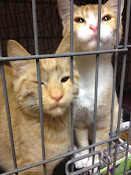 ADOPTED ROY & RODGERS!!
