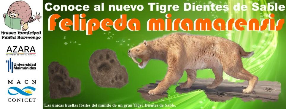 Felipeda miramarensis. Nuestro Tigre Dientes de Sable unico en el mundo.