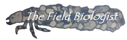 The Field Biologist