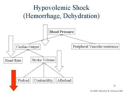dr meducci vet's blog: hypovolemic shock (haemorrhagic), Skeleton