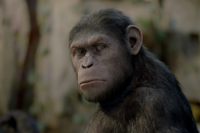 vipertrix - vipertrix's Presentation  Rise_of_the_planet_of_the_apes-1-andy_serkis
