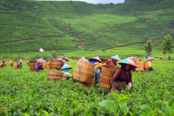 Potensi Sumber Daya Alam Jawa Barat Amore De Amigos