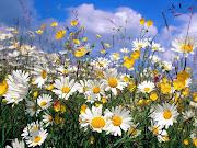 Que traga as flores da Primavera e com elas, a Esperança.
