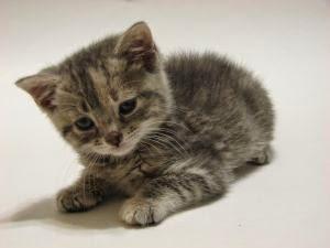 Panduan Singkat Memelihara Kucing