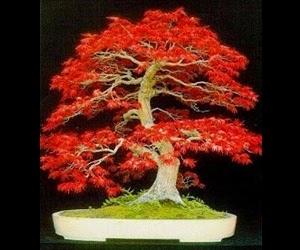 """<img src=""""bonsai18.jpg"""" alt=""""foto bonsai"""">"""