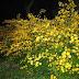 Mellow Yellow Monday #170 - Yellow Flowers