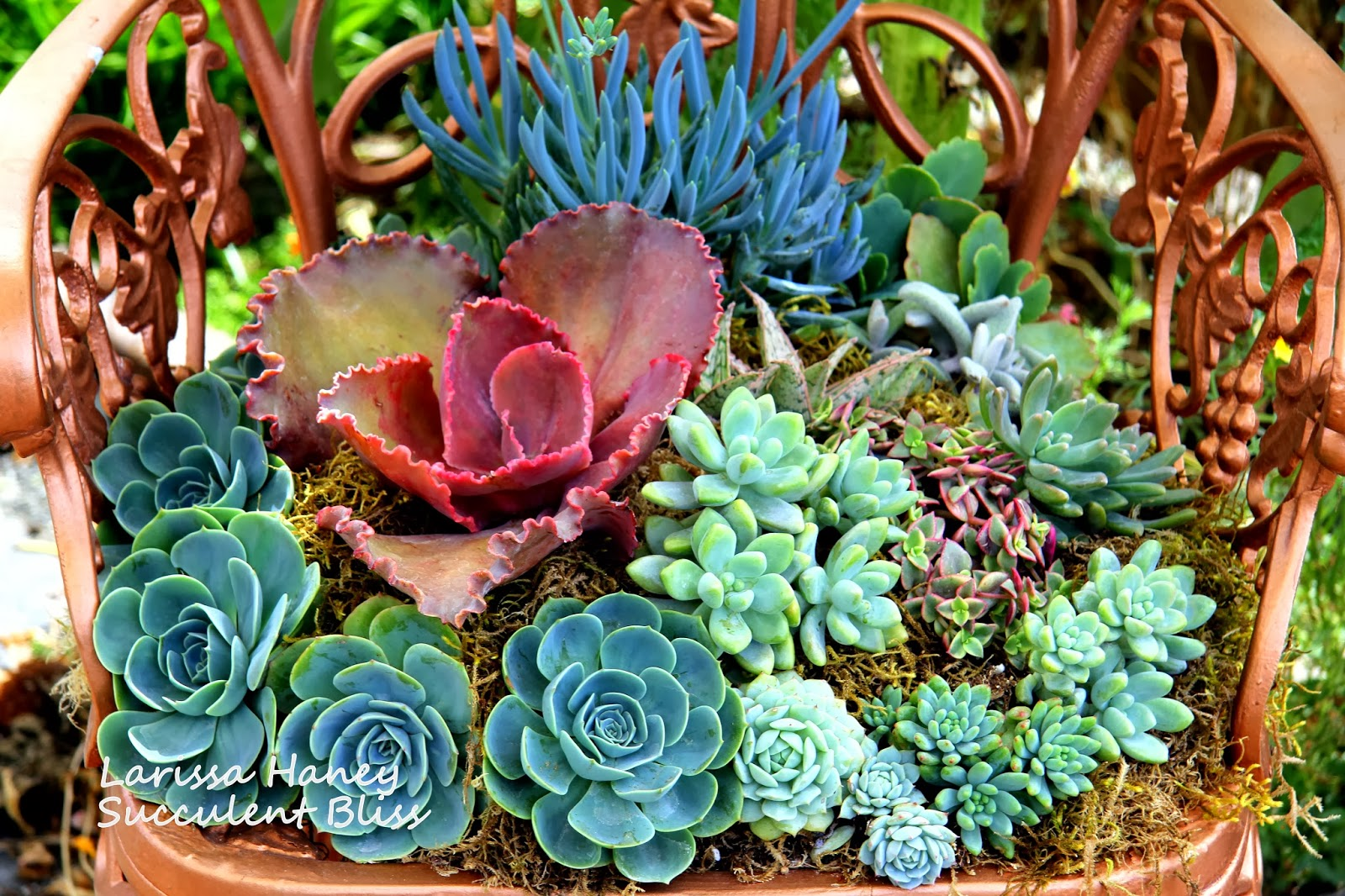 Succulent Bliss on