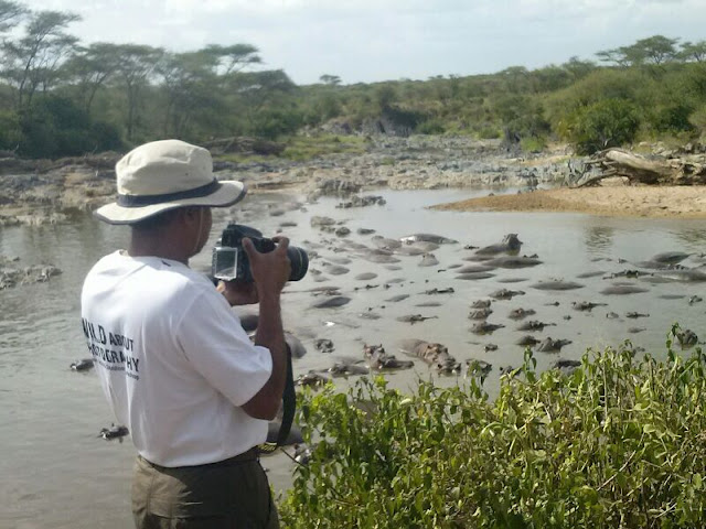 Retima Hippo Pool Serengeti