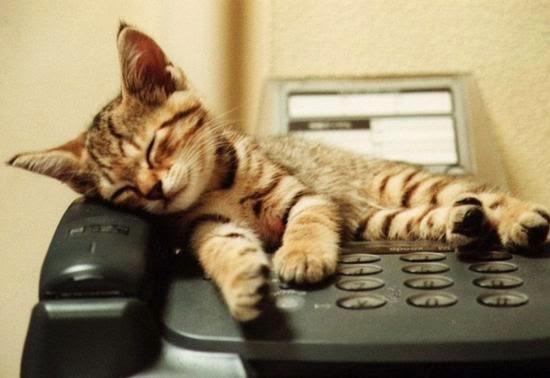 Смешной котенок. Фото дня. Позвони мне, позвони