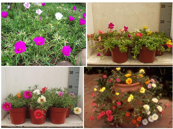 Pin Paisagem Flores Minhas Imagens Ajilbabcom Portal on Pinterest