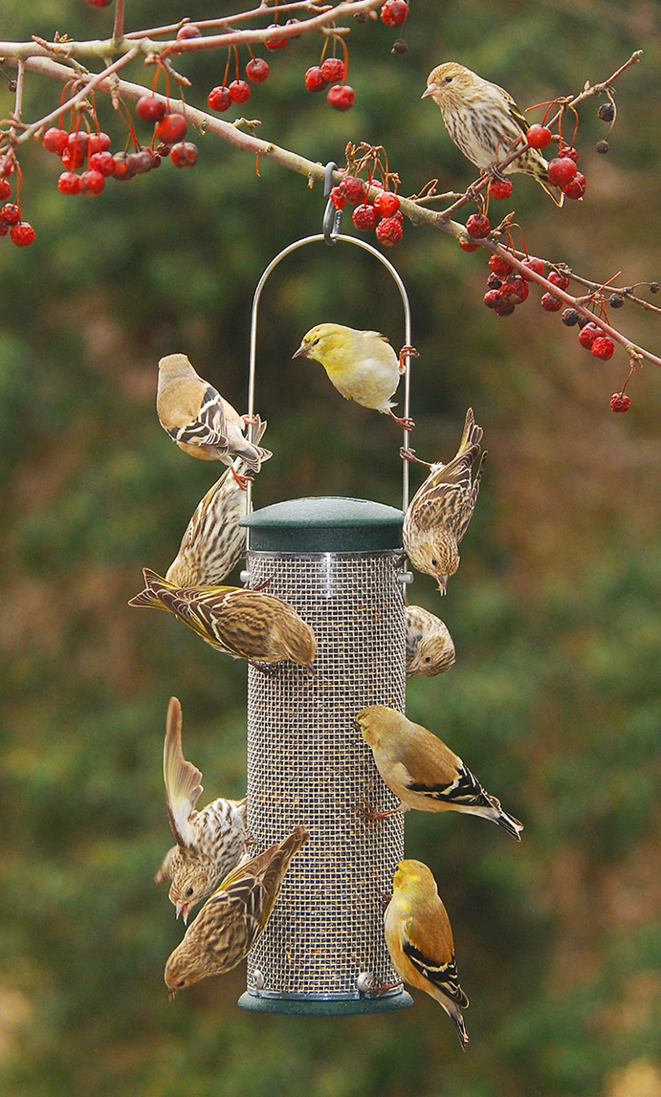wild birds unlimited winter finch forecast 2015 2016
