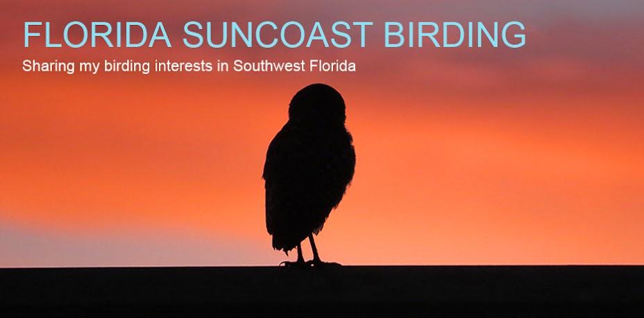 Florida Suncoast Birding