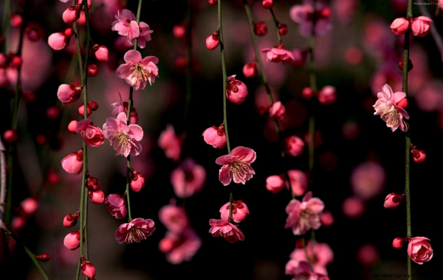 Pink Flower Desktop Wallpapers   Wallpaper Cave