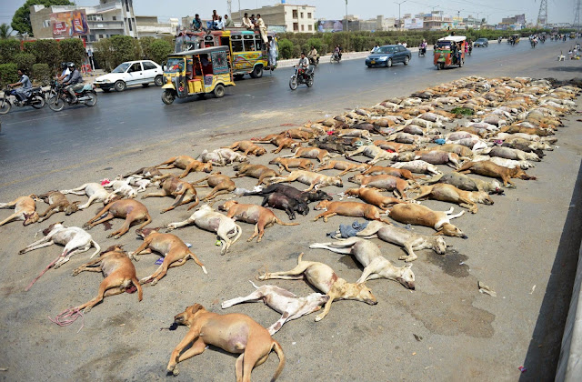 campaign to eliminate stray dogs whose numbers are increasing alarmingly.