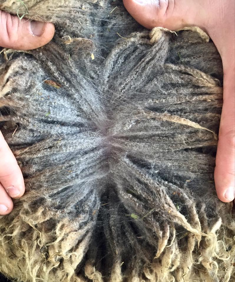 Tradtional 1927 Standard Shetland wool