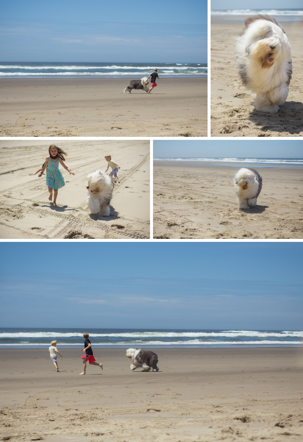 Portland Family Photographer, Cape Kiwanda, Old English Sheepdog, Shannon Hager Photography