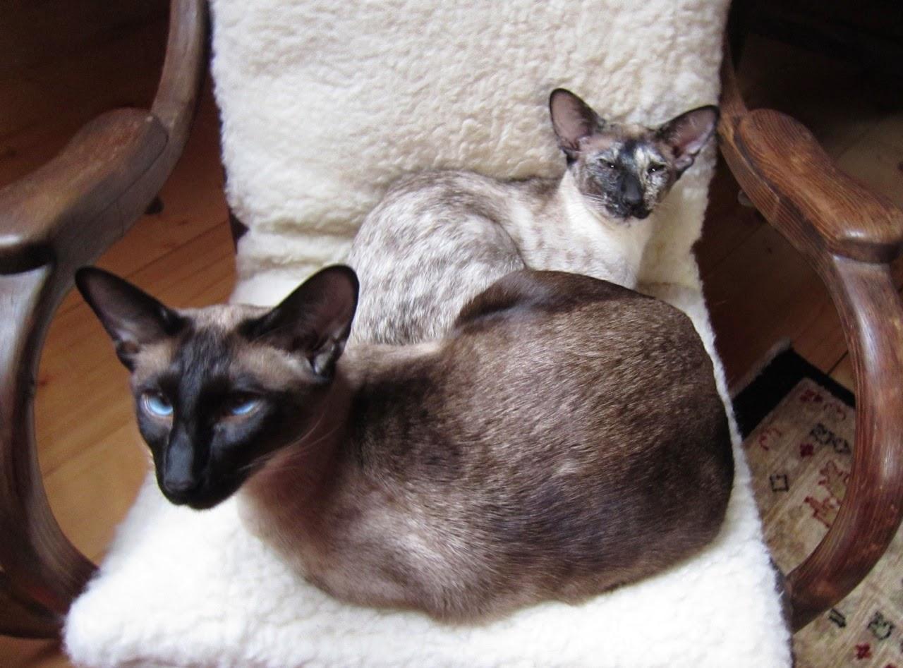 Chouchou and Elioth