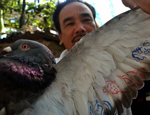 Ngư dân Lý Sơn bắt được chim bồ câu có ký tự lạ ở Hoàng Sa
