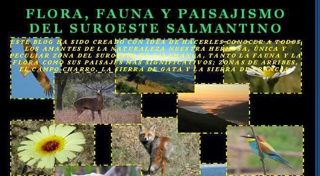 Blog amigo: