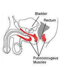 Músculos Kegel como retardar a ejaculação e prolongar o prazer sexual