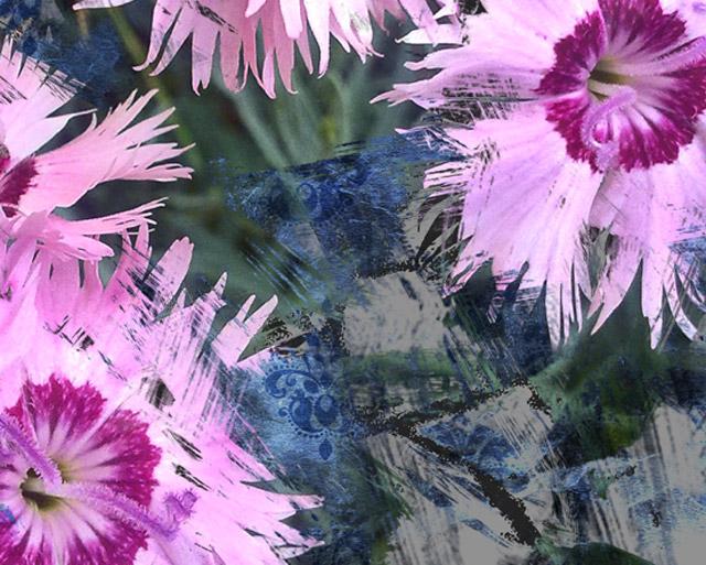 dianthus-flor-silvestre-detalle-dos-composición-digital