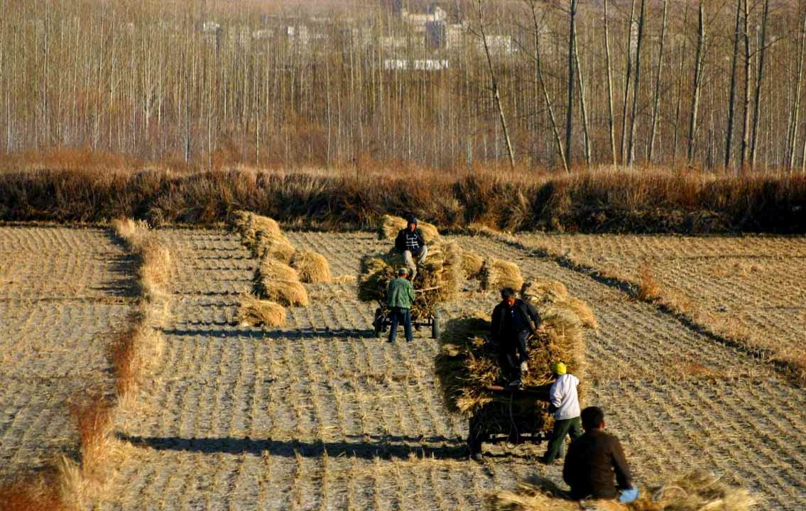 http://www.scmp.com/news/china/article/1745275/china-says-producing-safer-foods-not-bumper-harvests-now-priority-farming