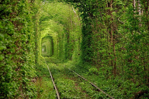 Ukraine's Leafy Green 'Tunnel of Love'