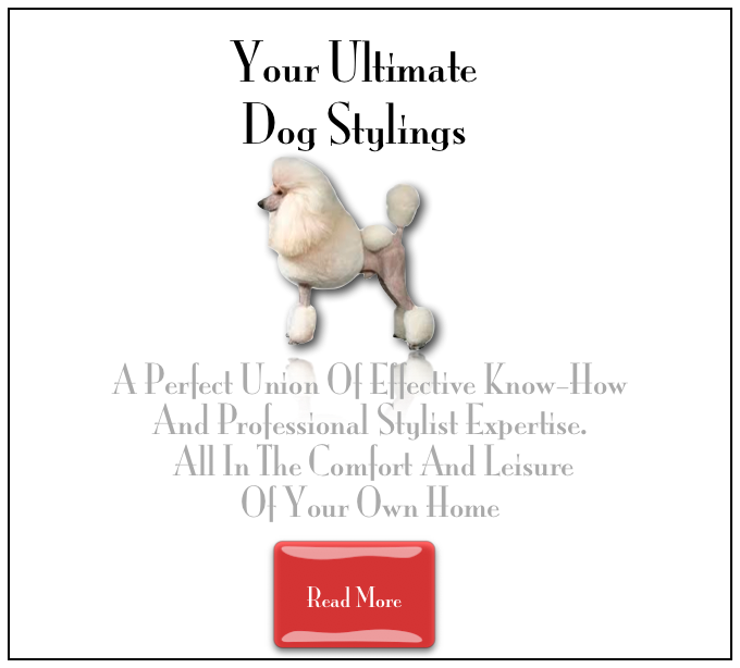 Your Ultimate Dog Grooming