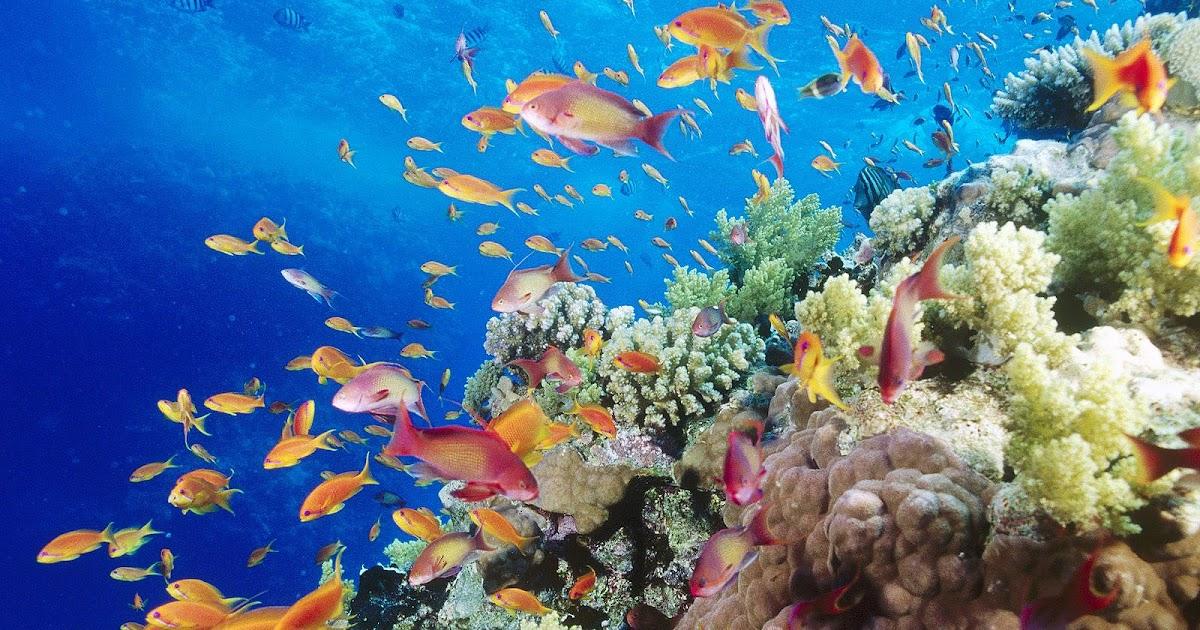 achtergrond met tropische vissen