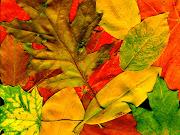 Muchas hojas del color del otoño. Fondo de pantalla de hojas de el color de . muchas hojas del color del otoã±o