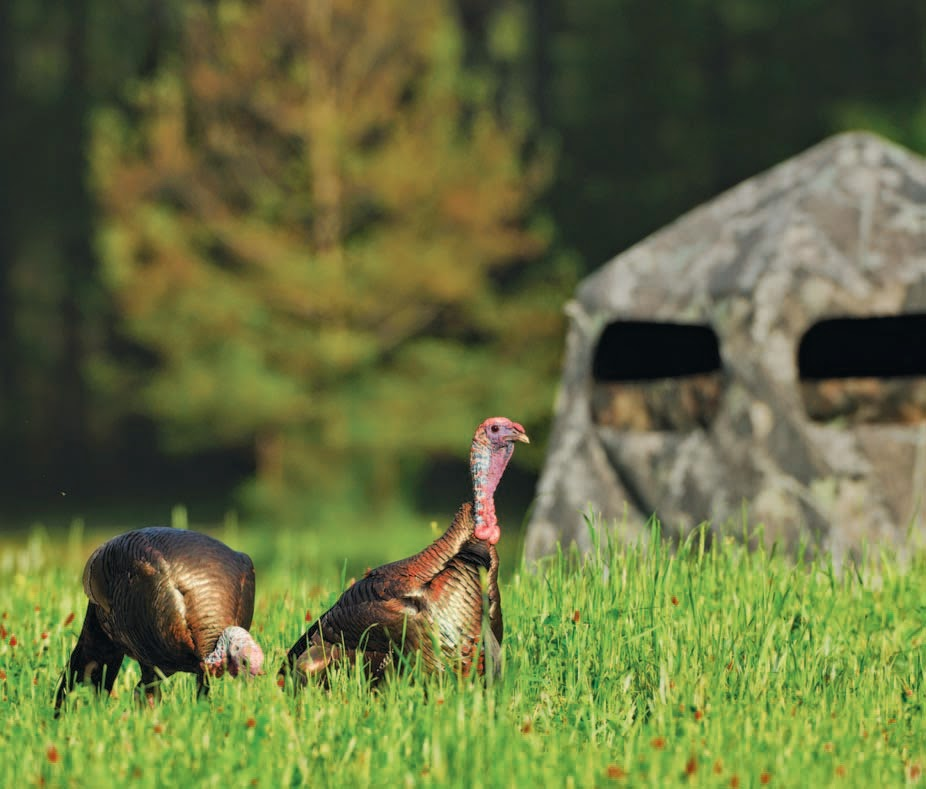 Food Plots For Turkeys Food Plots And Other Openings