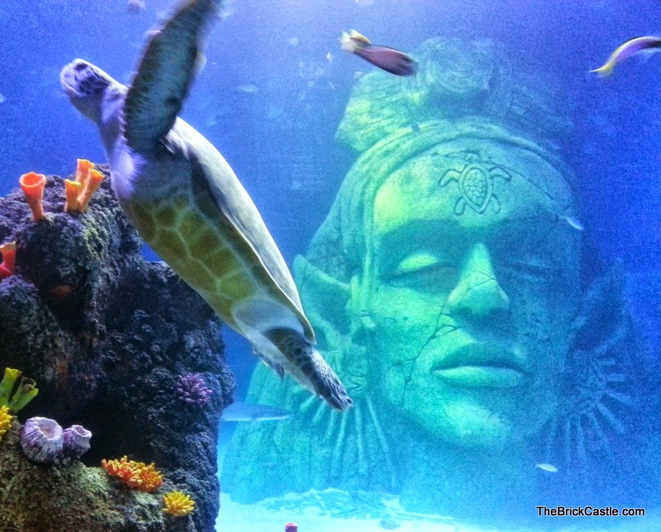 Sea Life Manchester giant stone head and turtle in main tank