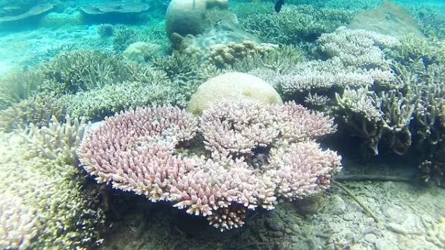 马来西亚-热浪岛