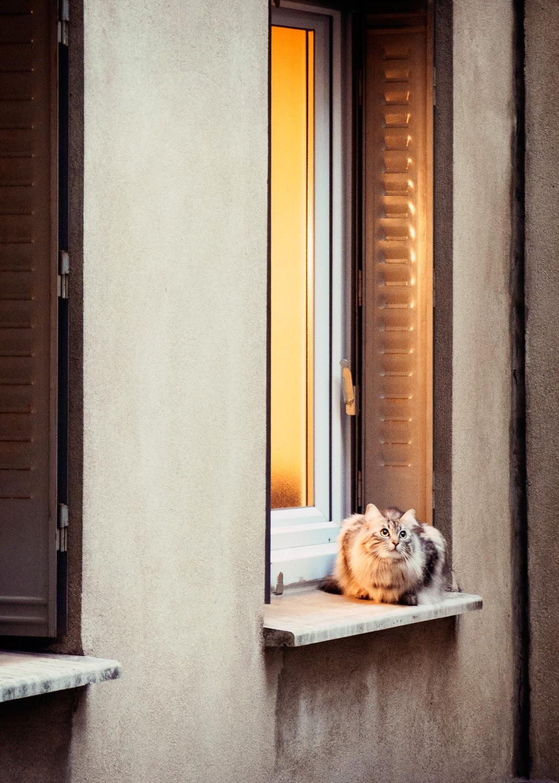 Galia Alena Travel Photography Paris cat