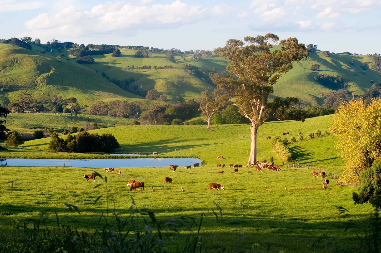 Image result for australian countryside