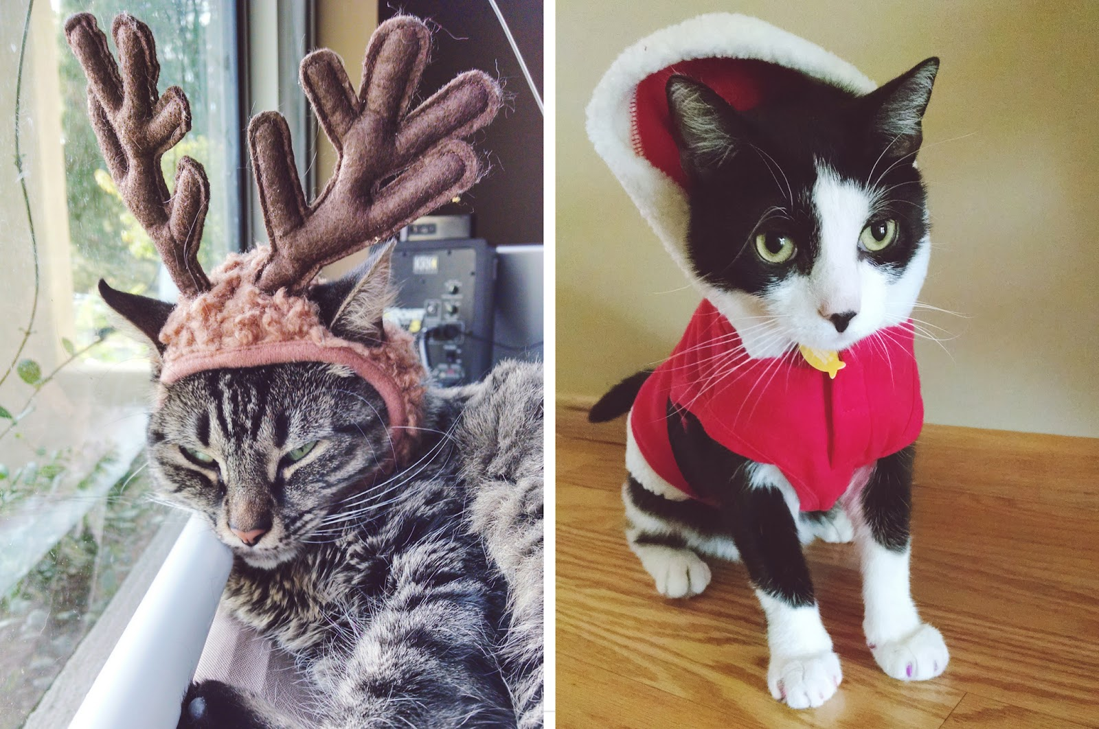 Santa Claws is coming to town - littleladylittlecity.com