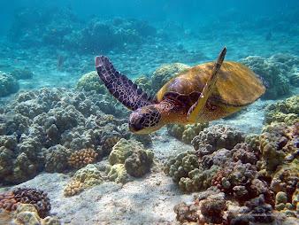 #7 Turtle Wallpaper