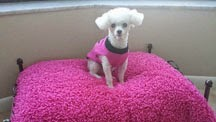 Handmade Silky Faux Fur Dog Blanket by Bella Mia