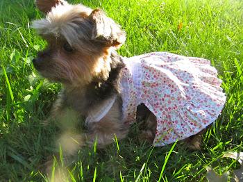 Lilly Foschino Dog Fashion