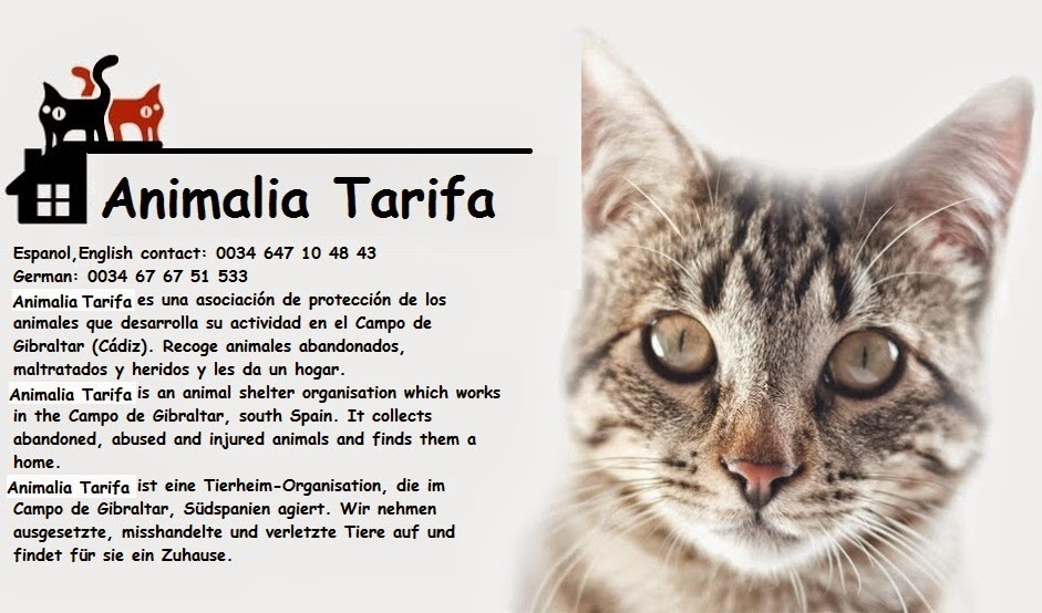 Animalia Tarifa