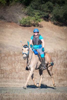 palomino mule endurance