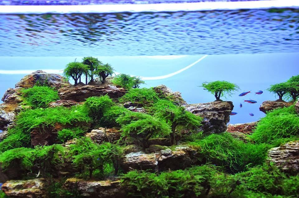 Aqua fresh plant aquascape dan ikan hias pekanbaru - Gambar aquascape ...